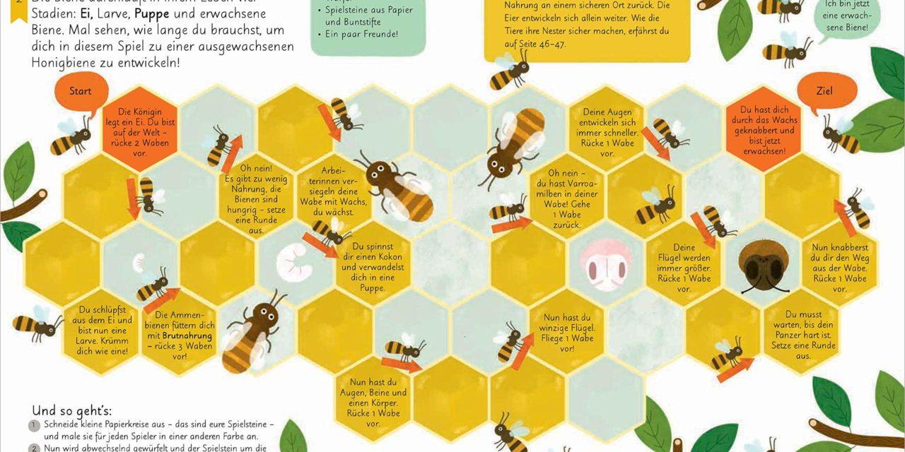 Neuerscheinung: Bienen, Erforschen, Experimentieren, Basteln